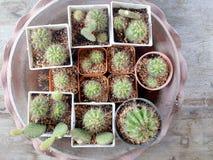Kaktus na drewno stole Obrazy Royalty Free