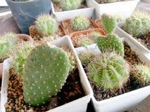 Kaktus na drewno stole Zdjęcie Royalty Free