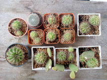 Kaktus na drewno stole Obraz Stock
