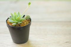Kaktus na drewno stole fotografia royalty free