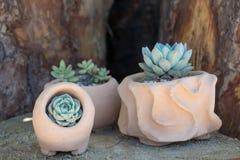 Kaktus na kwiatu garnku zdjęcie stock