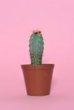 Kaktus na menchiach Fotografia Stock