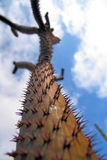 Kaktus na niebie Obraz Royalty Free