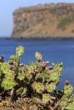 Kaktus na oceanside Zdjęcia Royalty Free