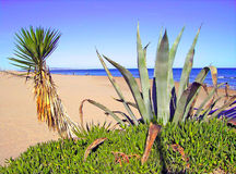Kaktus na plaży Zdjęcia Stock