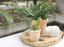 Kaktus na stole w kawiarni Zdjęcia Royalty Free