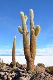 Kaktus na Uyuni soli mieszkaniach w Boliwia Zdjęcie Stock