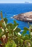 Kaktus nad wodą Wied Zurrieq Fjord na południowej końcówce Malta jest Obraz Royalty Free