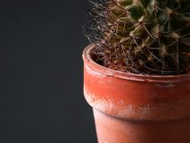 Kaktus-Nahaufnahme Lizenzfreie Stockbilder