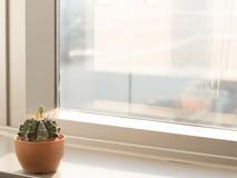 Kaktus nahe Fensterglas mit warmem Ton, Stadtansicht, Kopienraum Lizenzfreie Stockbilder