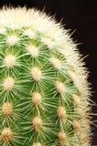 Kaktus-nahes hohes Stockfoto