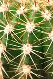 Kaktus-nahes hohes Stockfotografie
