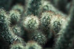 Kaktus, naturalna zakończenie fotografia Zdjęcia Royalty Free