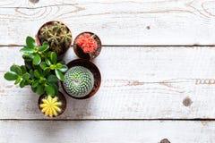Kaktus och bakgrund för suckulenthusväxter Samling av olika husväxter på vit träbakgrund arkivfoton