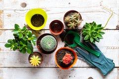 Kaktus och bakgrund f?r suckulenthusv?xter Samling av olika husv?xter och att arbeta i tr?dg?rden handskar, l?gga in jord och mur royaltyfri foto