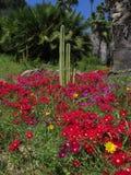 Kaktus och blommor Royaltyfria Bilder