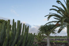 Kaktus och palmträd Royaltyfri Fotografi