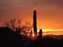 Kaktus och soluppgång Royaltyfri Fotografi