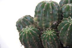 Kaktus och suckulent Arkivbilder