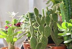 Kaktus och suckulenter royaltyfri bild