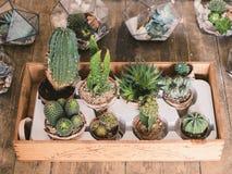 Kaktus och suckulenter i blomkruka fotografering för bildbyråer