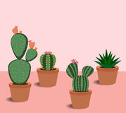 Kaktus och suckulenter med blommor Fotografering för Bildbyråer