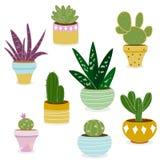 Kaktus- och suckulentväxter i krukor Arkivbild