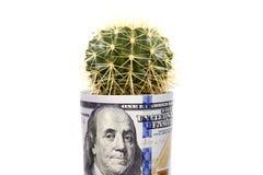 Kaktus od fałdowych dolarowych rachunków Zdjęcia Royalty Free
