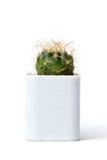 Kaktus odizolowywający na białym tle Zdjęcie Stock