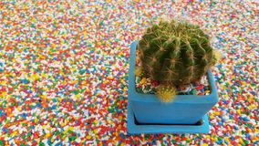 Kaktus odizolowywający na Pięknej kolorowej żwiru kamienia teksturze na th Zdjęcie Royalty Free