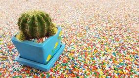 Kaktus odizolowywający na Pięknej kolorowej żwiru kamienia teksturze na th Obraz Stock