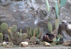 Kaktus ogrodowa sceneria Fotografia Royalty Free
