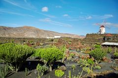 Kaktus ogrodowy Jardin De Kaktus w Lanzarote wyspie Fotografia Stock