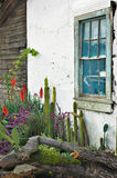kaktus ogrodu okno Obrazy Royalty Free