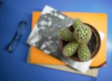 Kaktus på böcker Fotografering för Bildbyråer