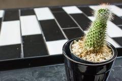 Kaktus på blomkrukan Royaltyfri Fotografi