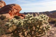 Kaktus på dalen av brand Arkivfoton
