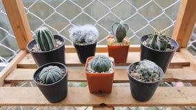 Kaktus på den wood hyllan Kaktus på den plast- krukan Tolerant växt för torka arkivfoto