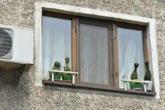 Kaktus på en kruka nära ett fönster arkivbilder
