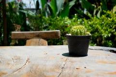 Kaktus på en trätabell Arkivfoto