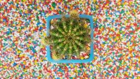 Kaktus på härlig färgrik grusstentextur på th arkivfoton