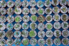 Kaktus på träbakgrund, kaktus i krukabakgrund Royaltyfri Bild