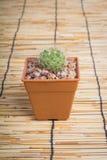 Kaktus på träbakgrunden Royaltyfri Fotografi