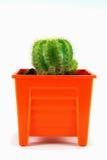 Kaktus på vit bakgrund Arkivbilder