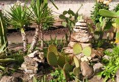 Kaktus, palmträd och suckulenter i trädgård arkivfoto