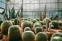 Kaktus pflanzte dunkle Töne und Weinlese des botanischen Gartens Stockbilder