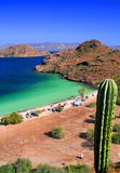 kaktus plaży morza Fotografia Stock