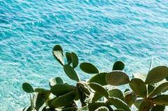 Kaktus przegapia błękitnego morze fotografia stock