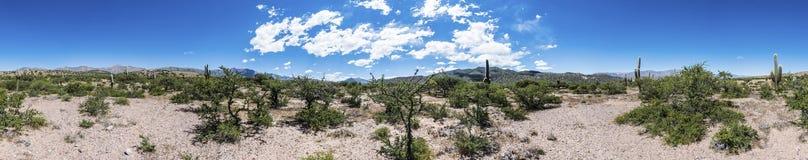Kaktus Quebrada de Humahuaca i Jujuy, Argentina Arkivbild