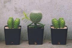 Kaktus rośliny i kopii przestrzeń Zdjęcie Royalty Free